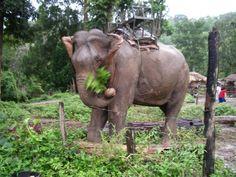 elephant fly swatter - Google 検索