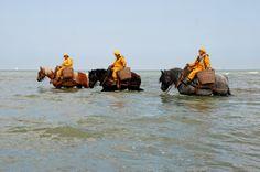 In Oostduinkerke wordt nog op garnalen gevist zoals inde goede oude tijd. Met paard! Heel interessant om aan de kinderen te laten zien.