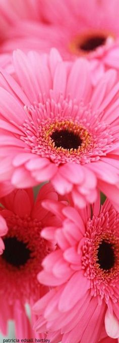 ⭐ pink Q316