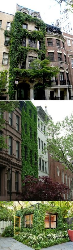 exPress-o: Ivy-Covered Houses