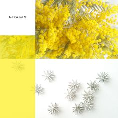 colección mimosa http://www.lepagon.com/index.php