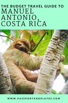 Traveling to Manuel Antonio, Costa Rica? This is everything you need to know about what to do, where to eat, how to get around, and more! Click to read and start planning your trip!  #CostaRica #CostaRicaTravel #CostaRicaItinerary  #ManuelAntonio #ManuelAntonioTravel #CentralAmerica #CentralAmericaTravel