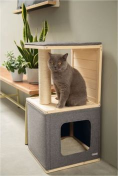 The post appeared first on Katzen. Cat House Diy, Diy Cat Tree, Cat Basket, Cat Shelves, Wooden Cat, Cat Playground, Pet Furniture, Furniture Movers, Furniture Removal