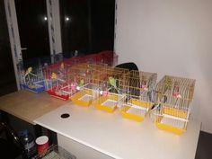 Abritus muhabbet kuş evi