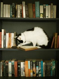 All sizes | So many books, so little time | Flickr - Photo Sharing!