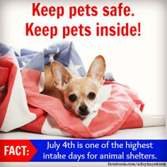 Pet safety for 4th of July #fireworks #dogs #cats (http://blog.adoptapet.com/fourth-of-july-fireworks-pet-safety/)