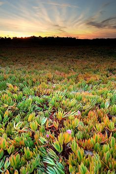 Wetlands, Playa Del Rey (outside of L.A.), CA.  Photo: Joshua Cripps via Flickr