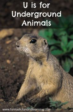 U is for Underground Animals... teachers' guides, book-related projects, crafts and a snack to give you a little inspiration for your own underground animal theme.