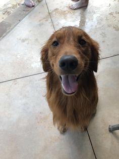 This doggo likes swimming! http://ift.tt/2tPHSwx