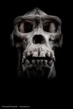 Gorilla Skull | Flickr - Photo Sharing!