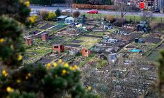 The new allotment: starting out | Life and style | guardian.co.uk