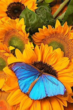 Have you ever dreamed you were a beautiful butterfly, well deep inside us all there is a part of us that is as fragile, majestic and colourful as a butterfly, but which one is it?