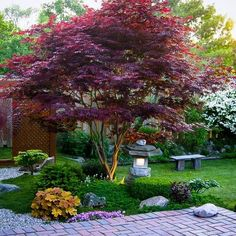 I don't like the garden at all but this is a perfect example of the natural form of the 'Bloodgood' Japanese maple. I don't like the garden at all but this is a perfect example of the natural form of the 'Bloodgood' Japanese maple. Japanese Garden Design, Small Garden Design, Japanese Gardens, Japanese Style, Japanese Garden Backyard, Japanese Plants, Hillside Garden, Garden Villa, Asian Garden