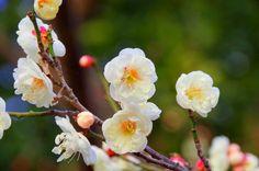 Free Images : nature, blossom, fruit, flower, bloom, food, spring ...