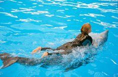 La increíble experiencia de nadar con #delfines en #ElNuevoRollo, un fantástico #ParqueAcuatico en #Acapulco. http://www.bestday.com.mx/Acapulco/ReservaHoteles/