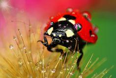 Ladybug by Mustafa Öztürk
