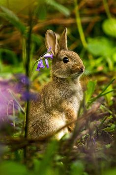 "afairyheart: "" Rabbit in the bluebells by Dulcie Fairweather """
