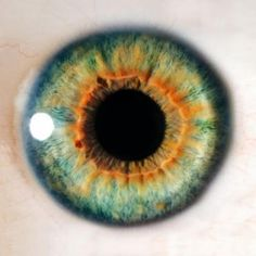 One of the latest advancements in regenerative medicine involves injecting stem cells directly into the retinas to repair damage done by degenerative eye diseases such as retinitis pigmentosa and age-related macular degeneration (AMD). Green Contacts Lenses, Colored Contacts, Eye Facts, Weird Facts, Random Facts, Random Things, Random Stuff, Halloween Contacts, Regenerative Medicine