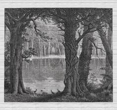 Design by riccardo zulato Fairy Tale Forest, Forest Art, Fairy Tales, Antique Prints, Ink Art, Photos, Landscape, Antiques, Painting