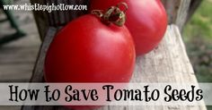 In 2013 I ventured into the world of saving seeds, and I started with tomatoes. I followed some lovely directions I found online from the Master Gardeners of Santa Clara County(this), and I will summarize them for you here. Selecting Your Tomatoes 1. Choose heirloom. Make sure you are NOT saving seeds from hybrid plants– …