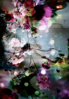 Raindrops and Roses — Isabelle Menin Abstract Photography, Fine Art Photography, Tableaux D'inspiration, Raindrops And Roses, Foto Art, Flower Wallpaper, Botanical Art, Art World, Pretty Pictures