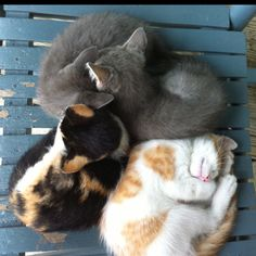 My cat would sleep like the white and orange one all the time!!!