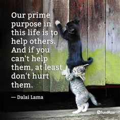 Our pine purpose in this life is to help others.  And if you can't help them, at least do 't hurt them.  - Dalai Lama