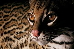 portraits that make us remember how mankind is negatively impacting other forms of life.species facing extinction,