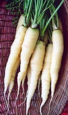 Radish French breakfast  organic seeds non-GMO Ukraine 2 g Farmer/'s dream