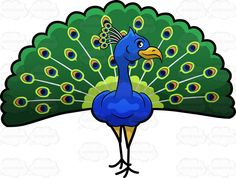 A Peacock showing off its colorful feathers :  A lovely colorful bird known as a peacock with stunning green blue orange and light green feathers and an orange beak  The post A Peacock showing off its colorful feathers appeared first on VectorToons.com.