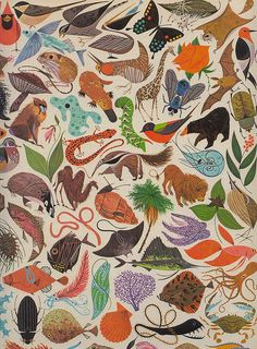 From a 1961 biology book / Illustration by Charles Harper / diversity of life