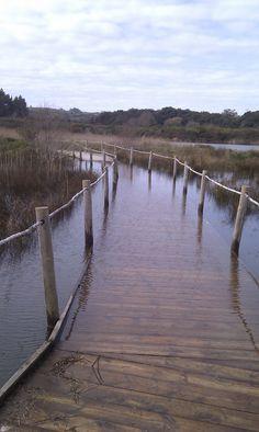 Reserva natural marisma del Joyel en Noja, Cantabria.