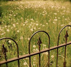 Gate in meadow Old Fences, Iron Fences, Fencing, Good Neighbor, Fence Gate, Garden Gates, Simple Pleasures, Garden Styles, Bellisima