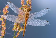 40 Beautiful Dew Drops Macro Photographs
