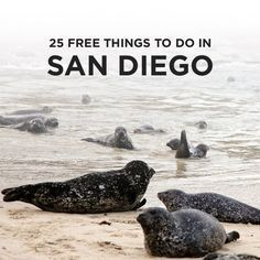 If you're visiting San Diego on a budget there are still plenty of things to do. We've put together a list of 25 Free Things To Do in San Diego for you! - Travel San Diego - Ideas of Travel San Diego San Diego Hiking, San Diego Travel, California Vacation, California Dreamin', San Diego Activities, Family Activities, Visit San Diego, San Diego To Do, Moving To San Diego