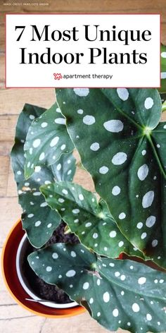 7 Houseplants With the Most Unique Leaves We've Ever Seen | Apartment Therapy