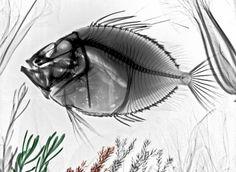 Intersecciones creativas: radiografías de flora y fauna (FOTOS)| Ecoosfera