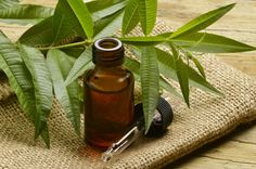 Oils that kill viruses and fungal infections: tea tree oil, lemongrass