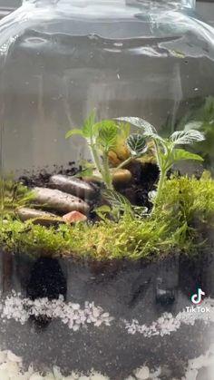 Terrariums, Succulent Terrarium, House Plants Decor, Plant Decor, Sun Plants, Garden Plants, Indoor Garden, Indoor Plants, Planting Succulents