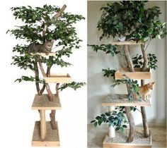 my real diy cat tree, diy, pets, pets animals, repurposing upcycling, rustic furniture, woodworking projects #catsdiyenclosure
