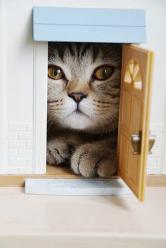 cat at the door- oh hello!