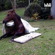 funny horse memes so true . funny horse memes hilarious so true . Funny Horse Videos, Funny Horse Memes, Funny Horses, Cute Animal Videos, Cute Horses, Funny Animal Memes, Funny Animal Pictures, Funny Memes, Baby Horses