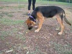 Dakota enjoying a pip chip. (Photo by Orchid)