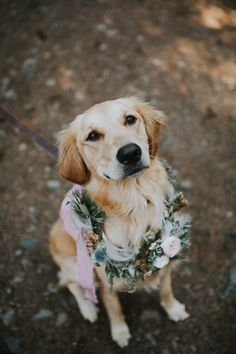 Nothing is more romantic and sweet than this Mount Rainier National Park elopement. Love Stories Co and Signpost Stories documented the day. Cute Funny Animals, Cute Baby Animals, Animals And Pets, Dog Photos, Dog Pictures, Beautiful Dogs, Animals Beautiful, Dog Wedding, Dream Wedding