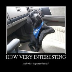 And what's the next?)) #funny #Great #Dane #dog #car