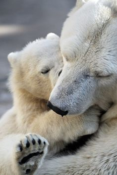 Little Polar Bear Cub With Mom - Sergey Skleznev photography