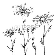 floral composition with ink drawing daisy flowers, doodle wild plants, monochrome black line drawing floral card, hand drawn vector illustration photo