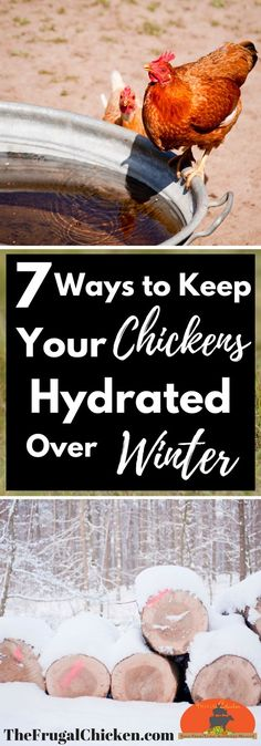 When winter comes, its easy for your backyard chickens to become dehydrated as water turns to ice. Heres 7 ways to keep them flush in water even when the mercury dips. Visit Us To Know Best Egg Laying Chickens, Raising Backyard Chickens, Backyard Poultry, Backyard Chicken Coops, Chicken Coop Plans, Keeping Chickens, Chicken Feed, Chicken Runs, Pet Chickens