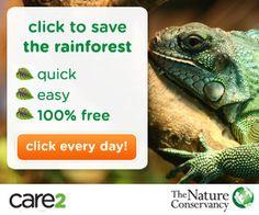 Save the Rainforest