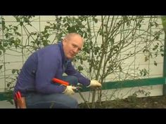 Owner Ben Hanna describes how to decide the number of roses to plant per trellis, along with tips about pruning for maximum coverage. Follow us on social med...